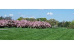 Photo of Whitemarsh Memorial Park